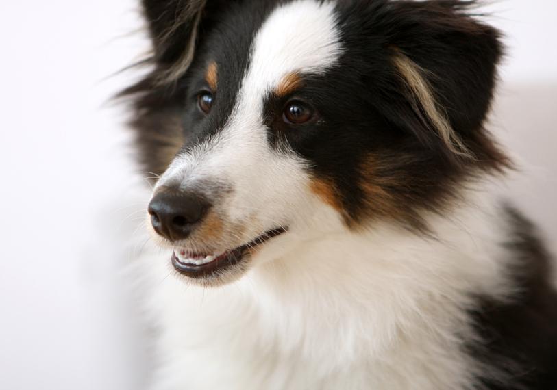 Das Bild der Kategorie Tiere zeigt einen Hund.