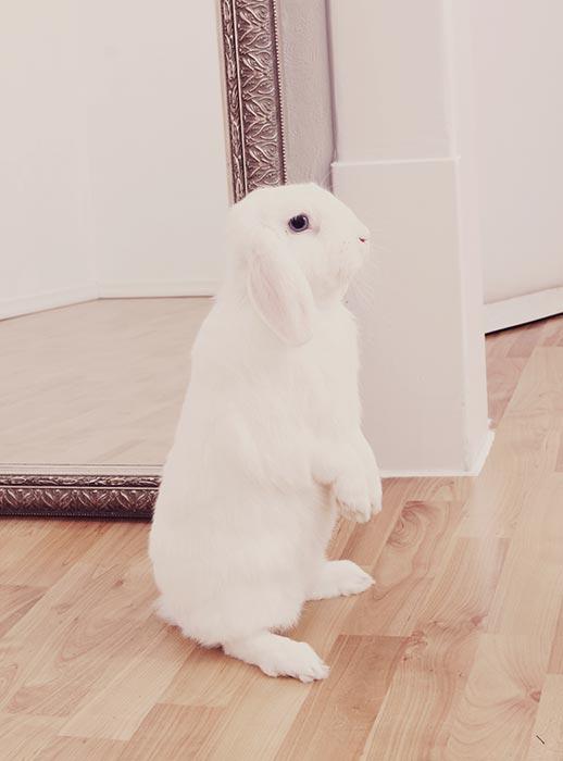 Das Bild der Kategorie Tiere zeigt einen weißen Hasen.