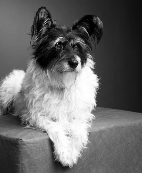 Das Bild der Kategorie Tiere zeigt einen Hund auf einer grauen Unterlage liegend.